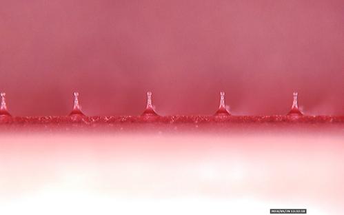 溶解型マイクロニードル